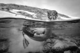 Antarctica_Page_186_CristinaMittermeier-1024x684