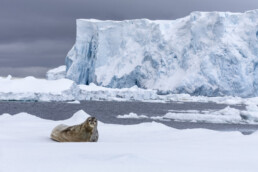 Falklands-Antarctica and South Georgia in 2014 with Quark Expeditions