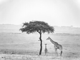 Kenya, Maasai Mara Natural Reserve