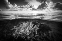 Cristina_Mittermeier_Sea_Garden_Hilton_Asmus_Contemporary