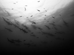 Cristina_Mittermeier_Shark_Squadron_Hilton_Asmus_Contemporary