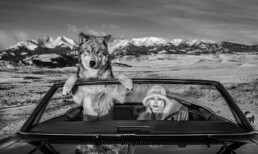 David_YArrow_Once_Upon_a_Time_in_the_West_Hilton_Asmus_Contemporary