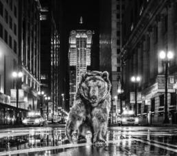 David_Yarrow_Chicago_Bear_Hilton_Asmus_Contemporary