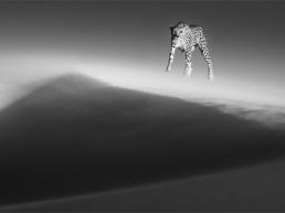 David_Yarrow_Ethereal_Dune_Hilton_Asmus_Contemporary