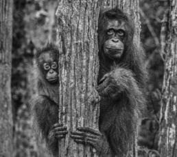 David_Yarrow_Family_Tree_Hilton_Asmus_Contemporary
