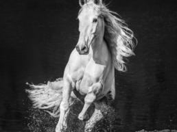 David_Yarrow_Horsepower_Hilton_Asmus_Contemporary