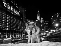 David_Yarrow_It_Is_Only_A_Matter_Of_Time_Hilton_Asmus_Contemporary