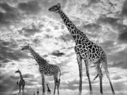 David_Yarrow_Keeping_Up_With_the_Crouches_Hilton_Asmus_ContemporaryDavid_Yarrow_Keeping_Up_With_the_Crouches_Hilton_Asmus_Contemporary