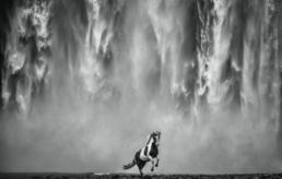 https://hilton-asmus.com/wp-content/uploads/2020/11/David_Yarrow_Legends_of_the_Fall_Hilton_Asmus_Contemporary-scaled.jpg