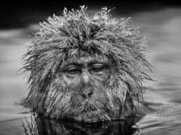 David_Yarrow_Miserable_Monkey_Hilton_Asmus_Contemporary