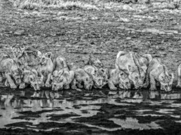 David_Yarrow_One_for_the_Road_Hilton_Asmus_Contemporary
