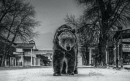 David_Yarrow_Out_of_Towner_Hilton_Asmus_Contemporary