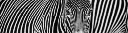 David_Yarrow_Parallel_Lines_Hilton_Asmus_Contemporary