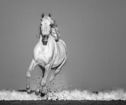 David_Yarrow_Pegasus_Hilton_Asmus_Contemporary