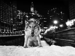 David_Yarrow_Sweet_Home_Chicago_Hilton_Asmus_Contemporary