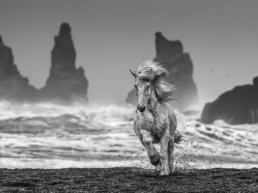 David_Yarrow_White_Horses_Hilton_Amsus_Contemporary