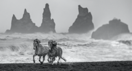 David_Yarrow_Wild_Horses_Hilton_Asmus_Contemporary