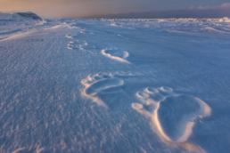 Polar Impressions - Paul Nicklen copy