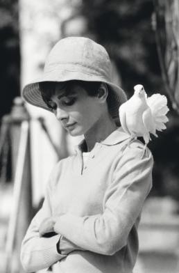 Terry_O_Neill_Audrey_Hepburn_with_Dove_Hilton_Asmus_Contemporary copy