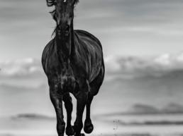 blackbeauty-david-yarrow+Hilton_Asmus_Contemporary