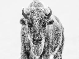 David_Yarrow_Ice_Age_Hilton_Asmus_Contemporary