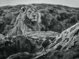 David_Yarrow_Serengeti_Hilton_Asmus_Contemporary
