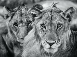 David_Yarrow_The_Boys_Are_Back_in_Town_Hilton_Asmus_Contemporary