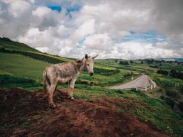 Mule Road